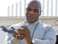 PETA a protestar el show sobre palomas de Mike Tyson