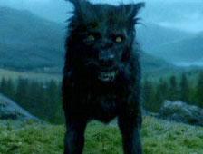 El perro Padfoot de Harry Potter necesita un nuevo hogar