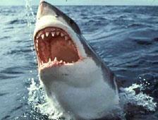 Cartel para Sharknado, una combinacion de tiburones y tornados