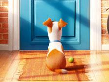 Tráiler de la película animada The Secret Lives of Pets, de los creadores de Despicable Me